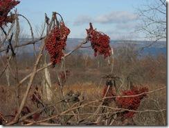 Novwalk_04_berries