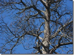 Novwalk_01_woodpecker tree