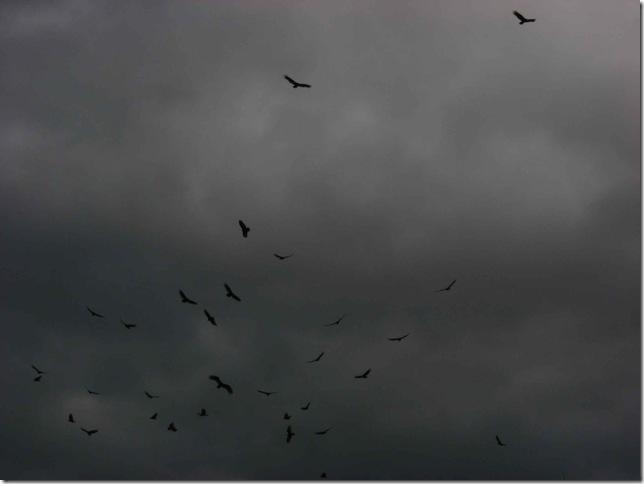 Crows in November 01