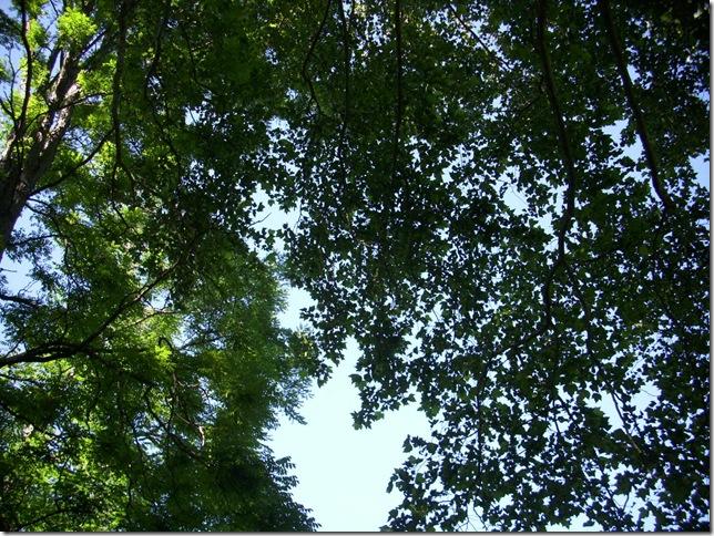 Overhead May 30 2010