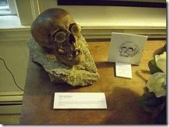 Gorey House skull