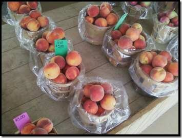 peaches picked today