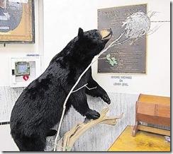 judge's bear