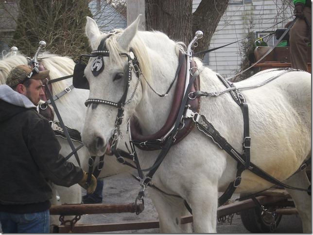 2013 03 17 Horses 2