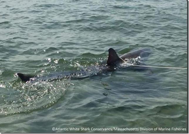 Shark rescue CCT 2015 07 13