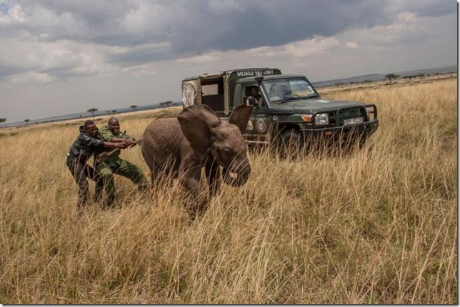 National Geographic Elephant rescue Peter Muller NG