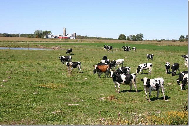 Wisconsin Dairy Farm Wisconsin Farm Bureau Federation