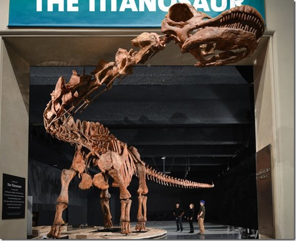 AMNH Titanosaur