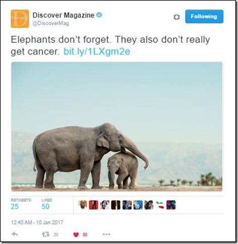Snip 2017 01 14 Discover Elephants never forget