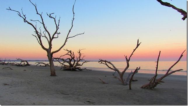 Atlas Obscura Driftwood Beach Jekyll Island Logala