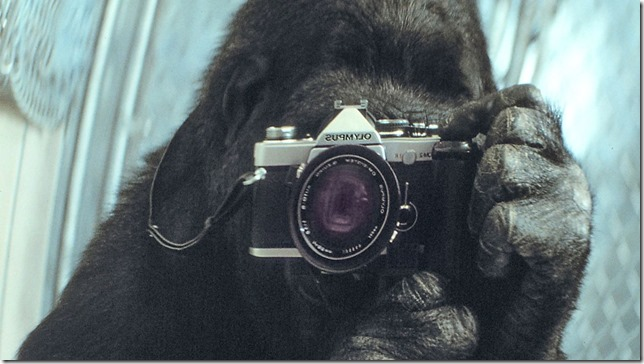 Koko Koko takes a selfie National Geographic via PBS via LA Times