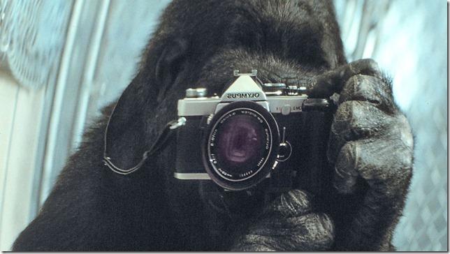 Koko Koko takes a selfie National Geographic via PBS via LA Times