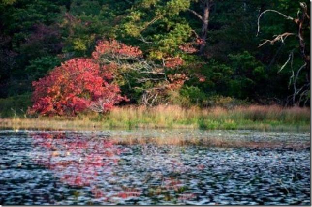 Cape Cod Beech Forest Pond Jesse Stuart Mechling nps