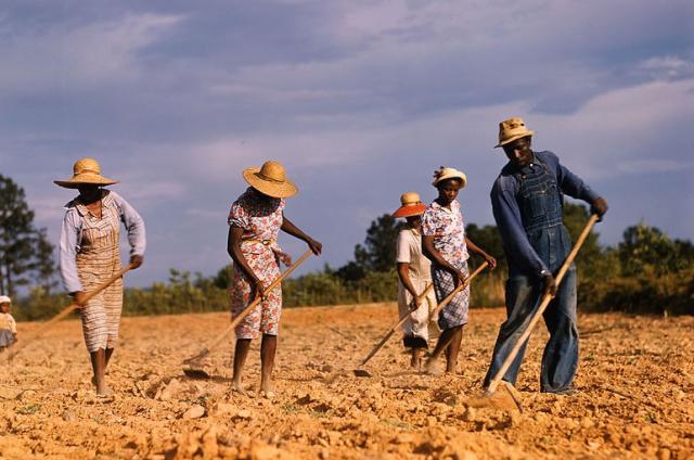 Depression Georgia Sharecroppers chopping cotton FSA Photo by Jack Delano LOC via Wikipedia 2