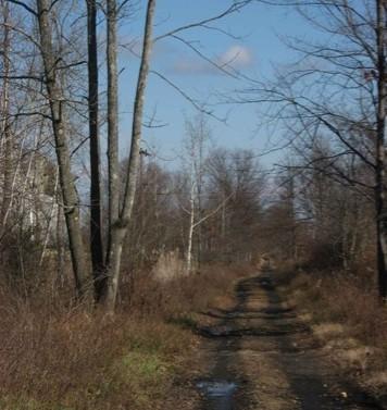 2008 11 17 November walk 02 Rail trail - Edited