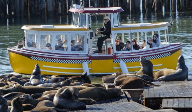 Nature Mammals Sea lions Preening for Tourists Mel Malcon LA Times - Edited