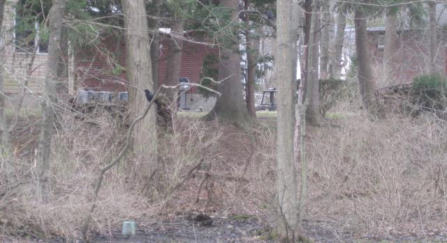 2020 04 02 Niskayuna Crow bodys business - Edited