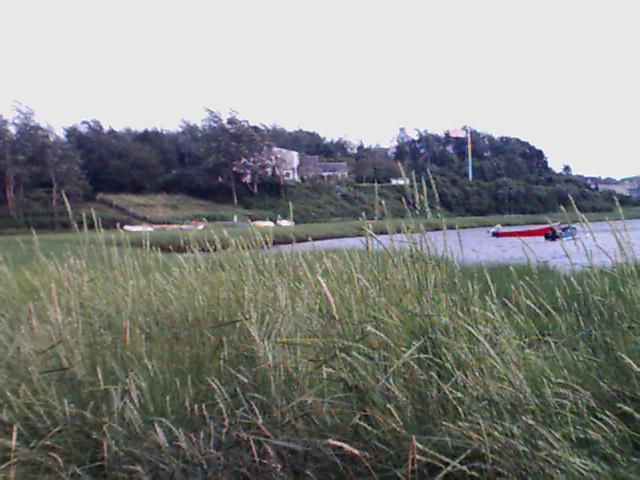05_mill_pond_grass