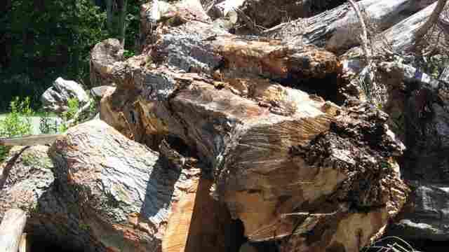 Wood_pile_04