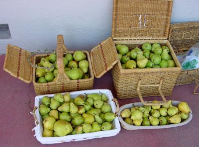 Sfmike_pears