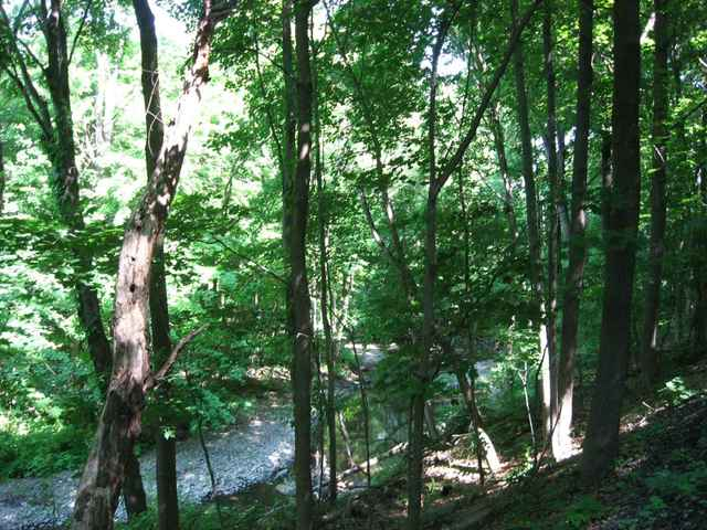 Stream_in_the_woods_01_2