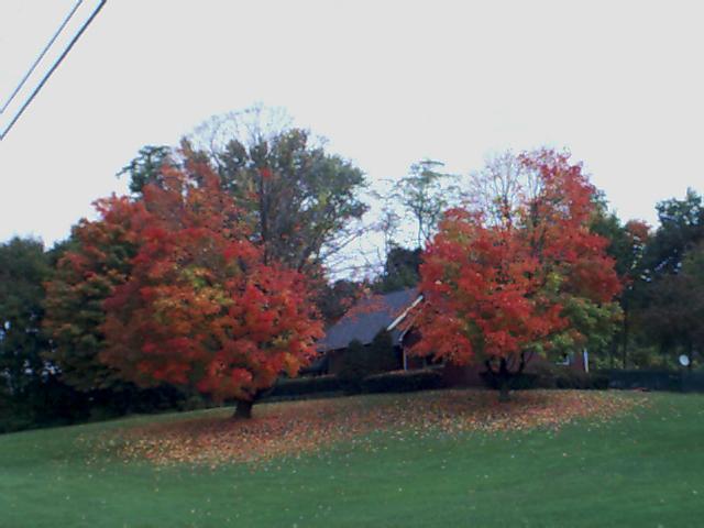 Foliage02_2