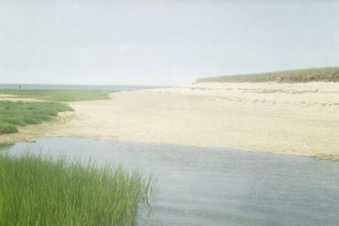 Salt_marsh