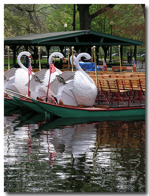 Swanboats_02